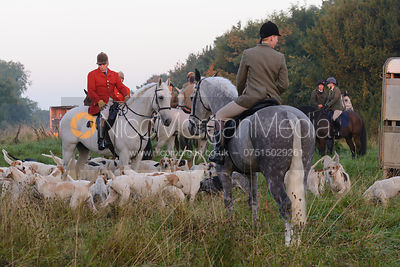 The Cottesmore hounds -The Cottesmore Hunt at America Lodge Crossroads 23/9