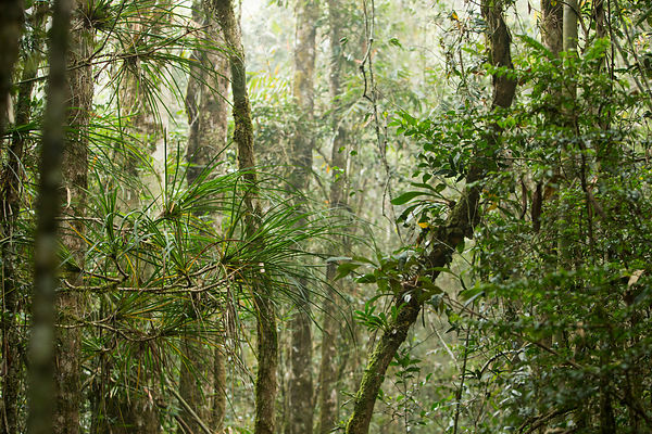 The misty rainforest of Ranomafana National Park
