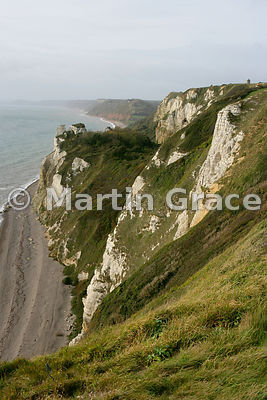 The Undercliff east of Branscombe, looking west, south Devon, England