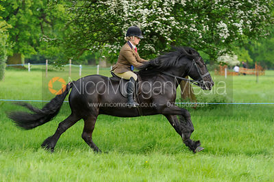 Championship 4 - BSPS Heritage Open Ridden - Baston South Lincs Show 2016