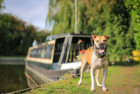 Dog standing outside a Canal Boat