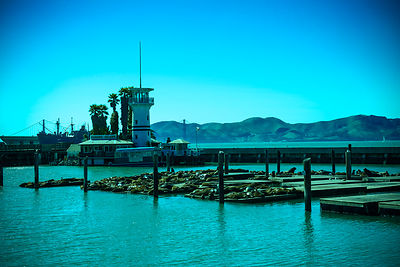 This is Pier 39, a popular shopping, dining, and entertainment spot in San Francisco.  The sea lions camped out in PIER 39's ...