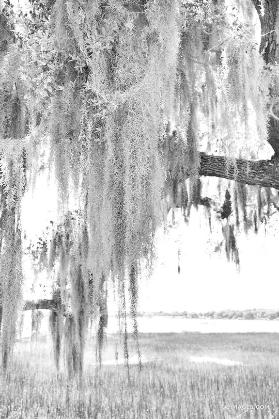 BEAUFORT SOUTH CAROLINA BLACK AND WHITE VERTICAL