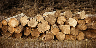 Wood logs in a stack