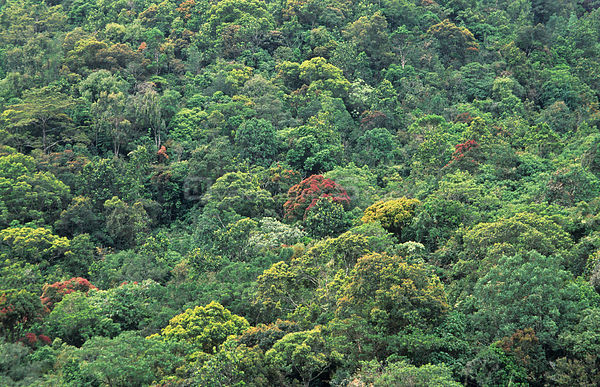 Aerial view of tropical rainforest canopy, Ratnapura, Sri Lanka