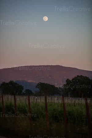 Twilight in a vineyard with mountains and moon in the sky