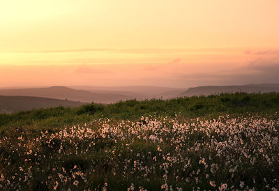 Cotton grass sunset on Curbar Edge