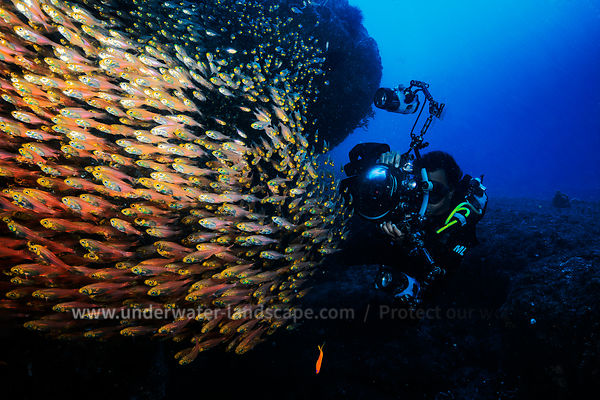 Glassfish and underwater photographer in Mozambique