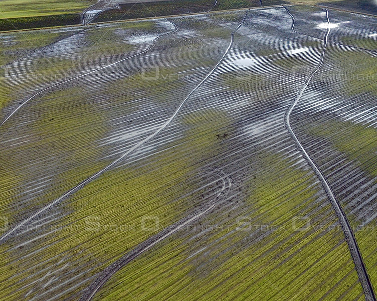 Wet Season Patterns of Plowed Farm Fields in Richmond BC