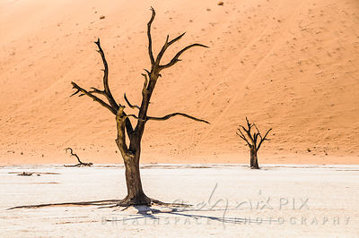 Dead vlei and the red sand dunes at Sossusvlei, highest dunes in the world