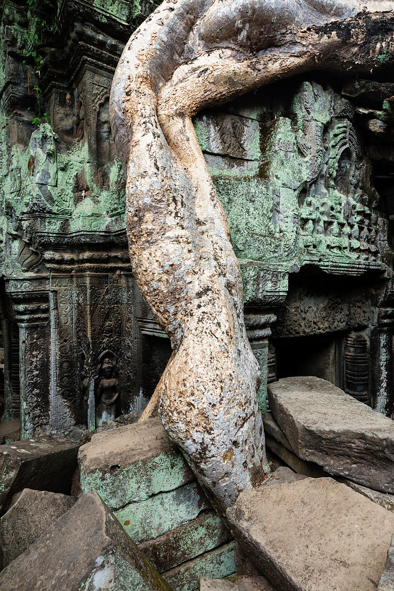 Tree Root Growing Around Ruined Temple