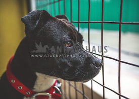 Dog at animal shelter looking out of cage