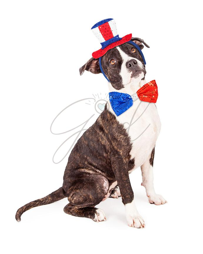 Patriotic American Dog Wearing Hat and Tie