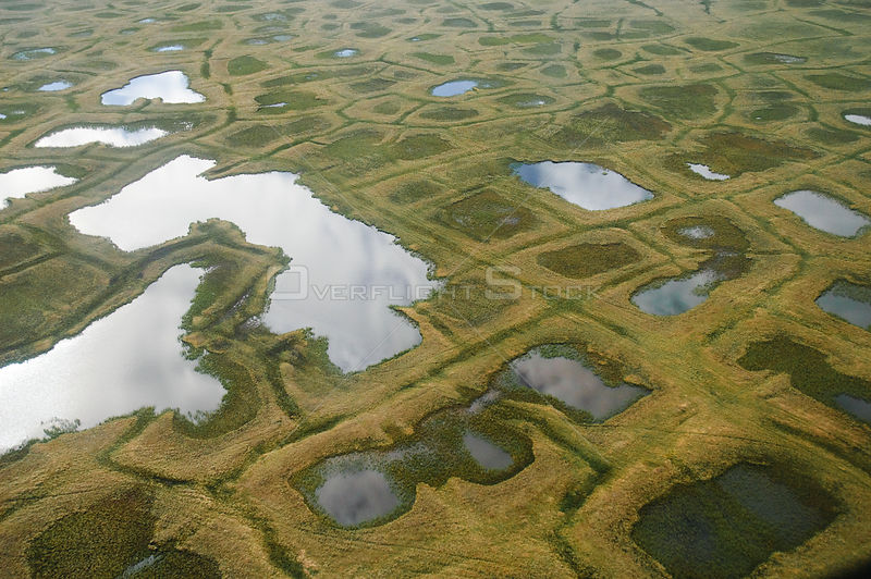 Aerial view of tundra ponds and polygon formations in the NPRA. Arctic Coastal Plain, Alaska. July.