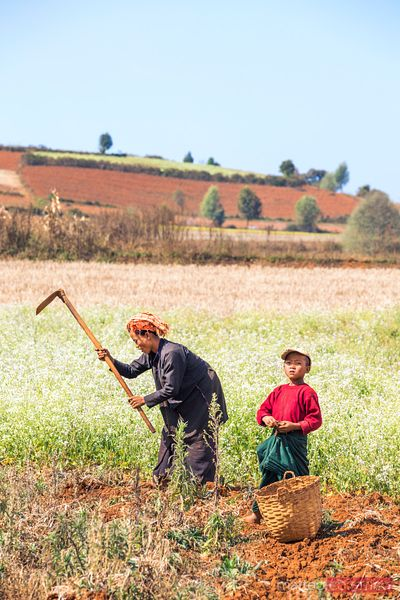 Mother and child working in a field, Myanmar