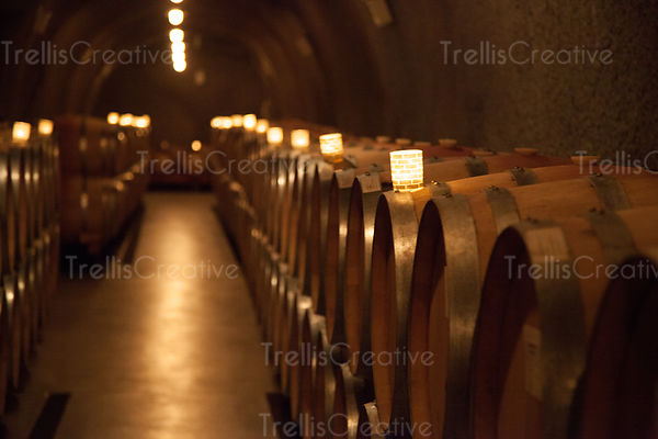 Oak barrels filled with wine ageing in a dark cave