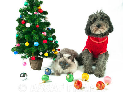 Dog, cat and a christmas tree