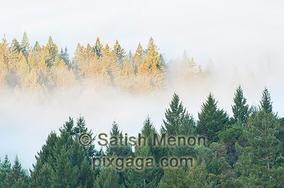 Foggy Morning, Big Basin Redwoods State Park, Boulder Creek, CA, USA