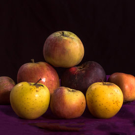 Heirloom Apples of Sonoma