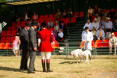 West of England Hound Show - Honiton '18