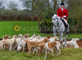 Andrew Osborne MFH and the Cottesmore Hunt hounds at Wymondham Manor