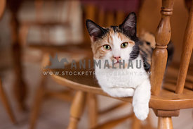 Kitten relaxing on a kitchen chair