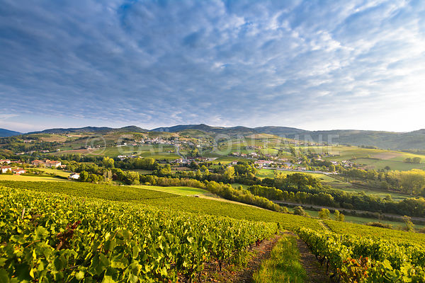Letra village and vineyards in Beaujolais land