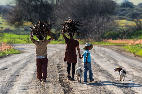 Family Carrying Firewood Home