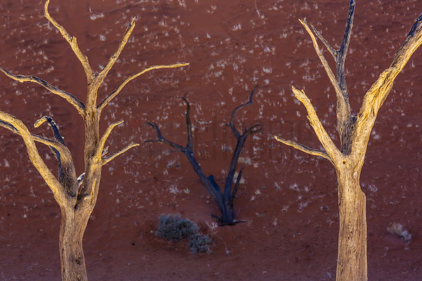Dead Trees at Dead Vlei.