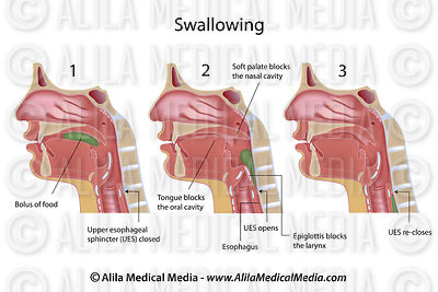 Swallowing, labeled