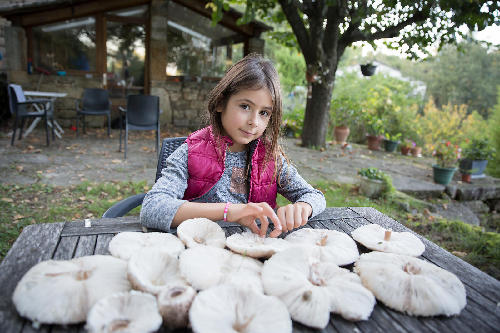 Rose, 7 ans et la cueillette de coulemelles,  Les Assions, Ardèche, France / Rose, 7 years old and the parasol mushrooms, Les Assions, Ardèche, France