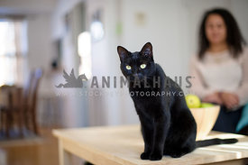 black cat on table with owner