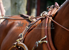detail of russet harness