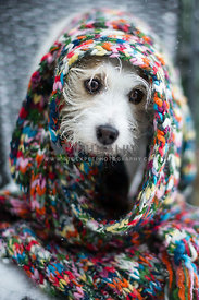 dog wrapped in colorful scarf in the snow
