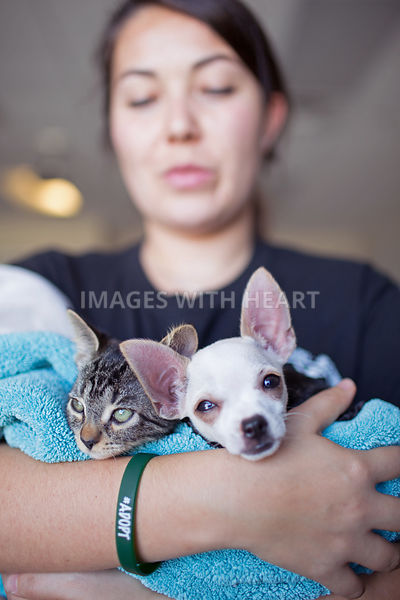 adopt, animal, arms, baby, canine, cat, chihuahua, cradled, cute, dog, domestic, feline, kitten, kitty, Lisa Prince Fishler, ...