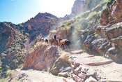 Mule Pack Train At A South Kaibab Trail Switchback - Grand Canyon