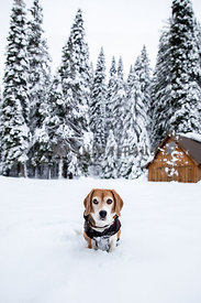 Worried dog in snow covered forest