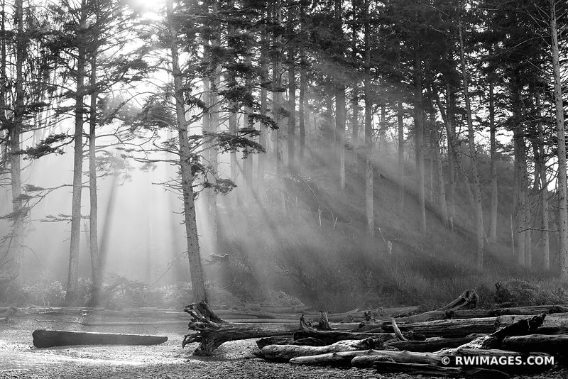 Olympic National Park Washington - Black and White Photos
