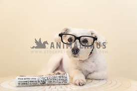 Dog wearing glasses with toy newspaper