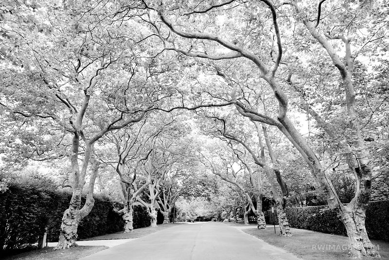 RESIDENTIAL STREET SOUTHAMPTON LONG ISLAND BLACK AND WHITE