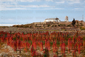 Quinoa field, San Juan Bautista / St John the Baptist church and Salar de Uyuni in background, Tahua, Bolivia