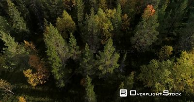 Autumn Color Forrest, Aerial Tilt View Over Colorful Autumn Trees, Revealing Fjeld Tunturi Mountains, on a Sunny and Rainy Fa...