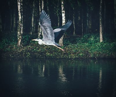 Tymon_north_heron_02052016