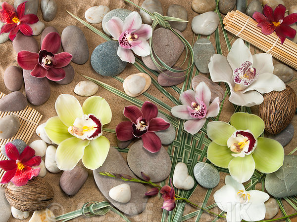 Zen like orchids and pebblse on sand
