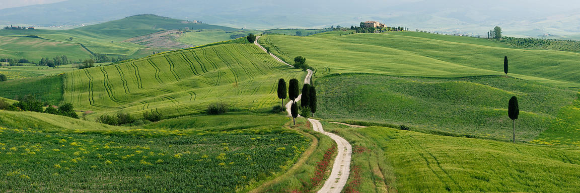 Winding Road and Cypress Trees