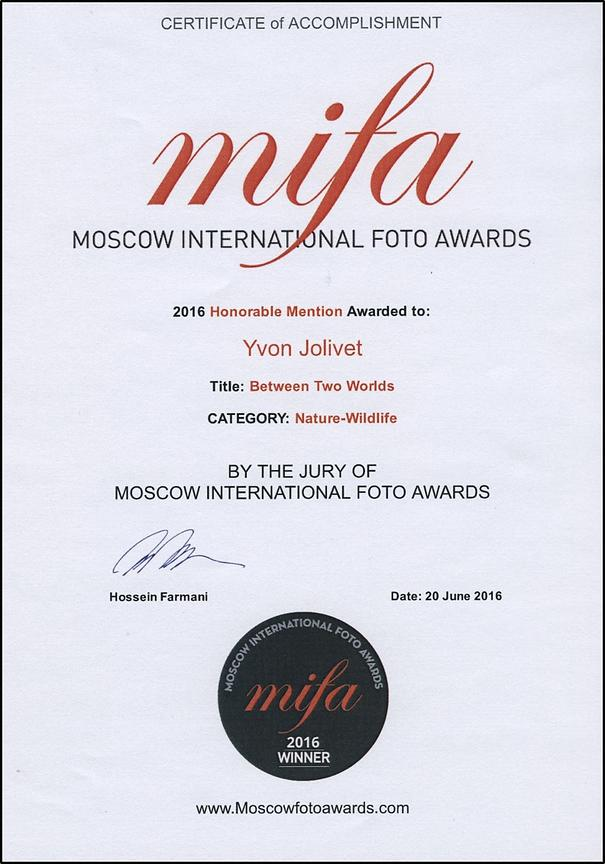 MIFA - Honorable Mention
