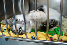 A rescue cat reaches a paw out from its cage at the animal shelter