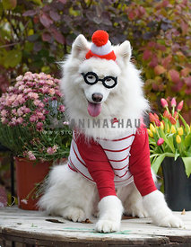 Where's Waldo dog dressed for halloween