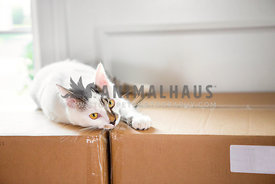 cat laying on packing boxes