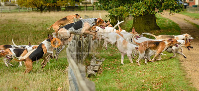 Fitzwilliam hounds jumping a fence near The Kennels.